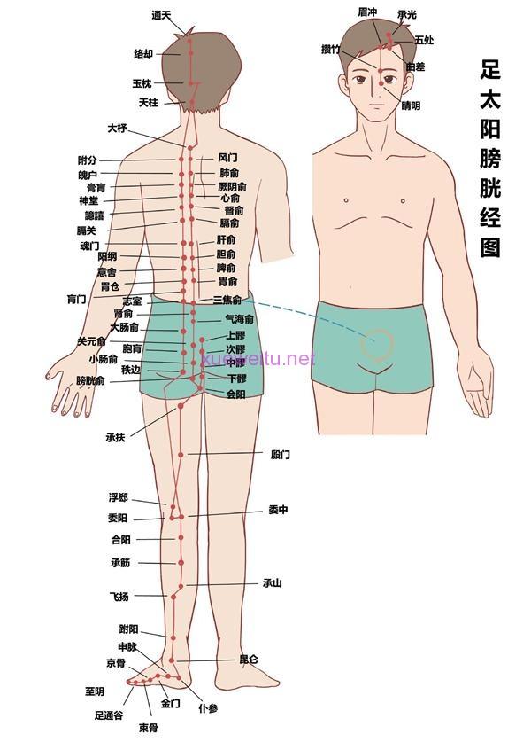 足太阳膀胱经