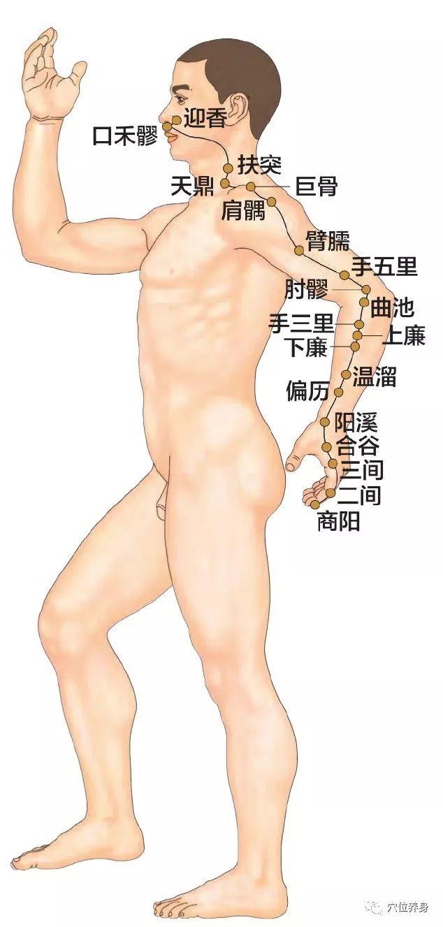手阳明大肠经——肠道健康的卫士