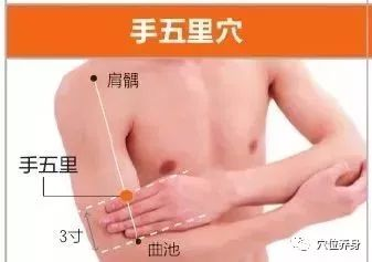 手阳明大肠经20个高清穴位图